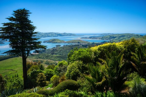 View from Larnach Castle Gardens